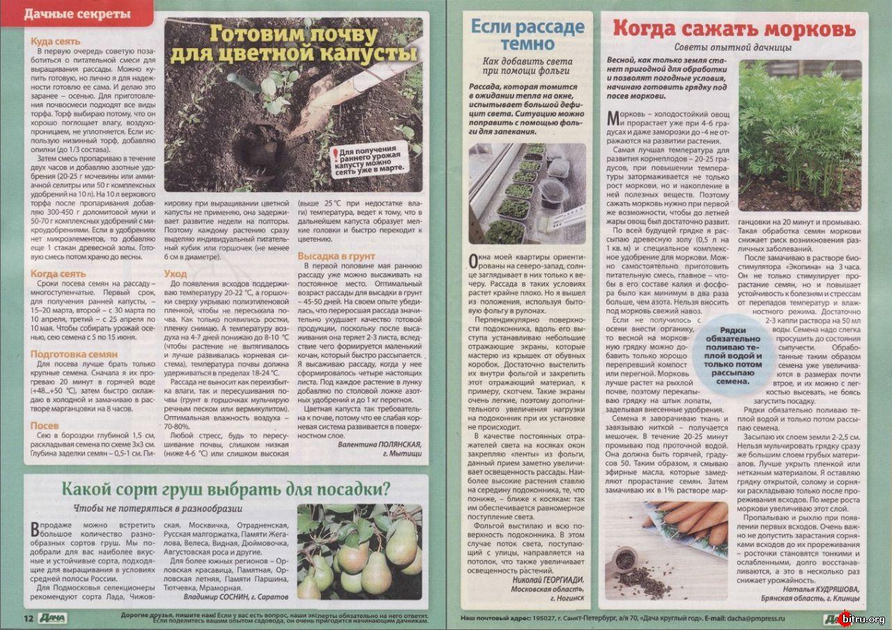 Посадка капусты в грунт рассадой сроки, правила, советы